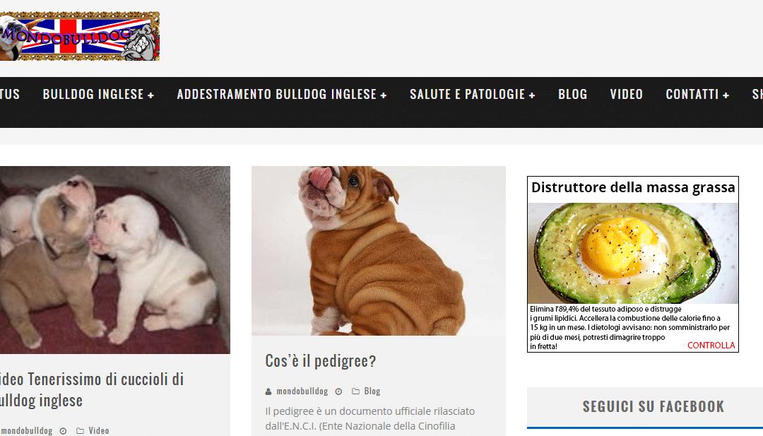 Mondobulldog